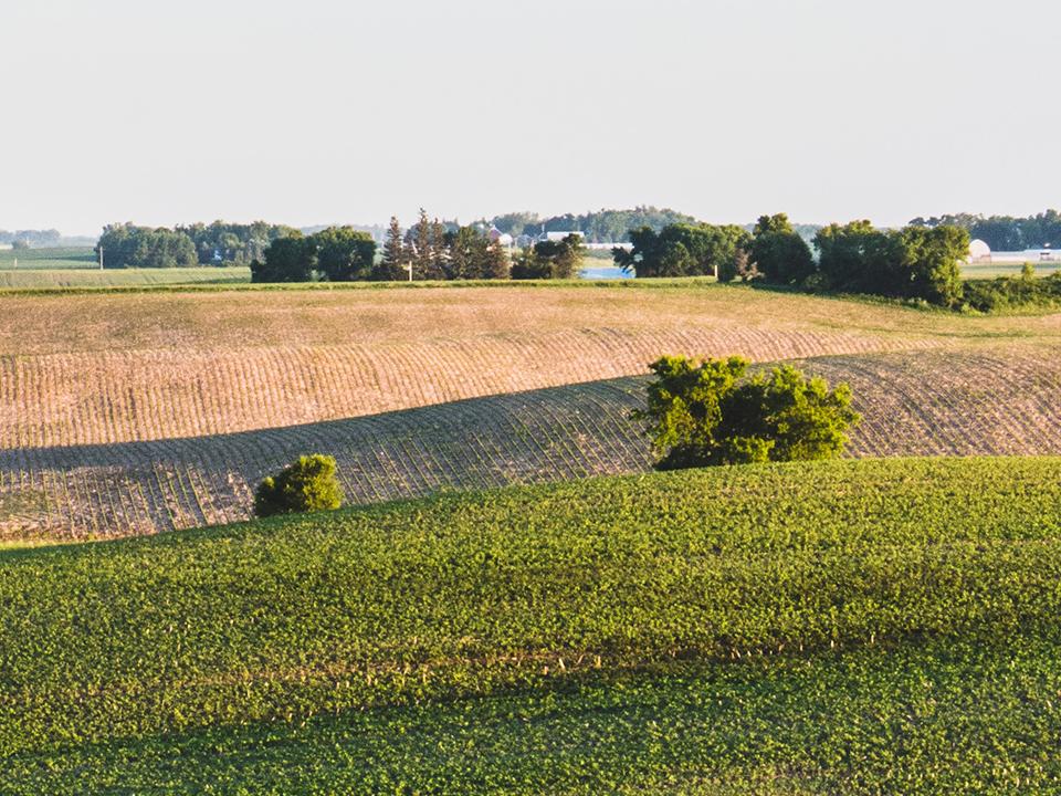 Masonry Field Right Half