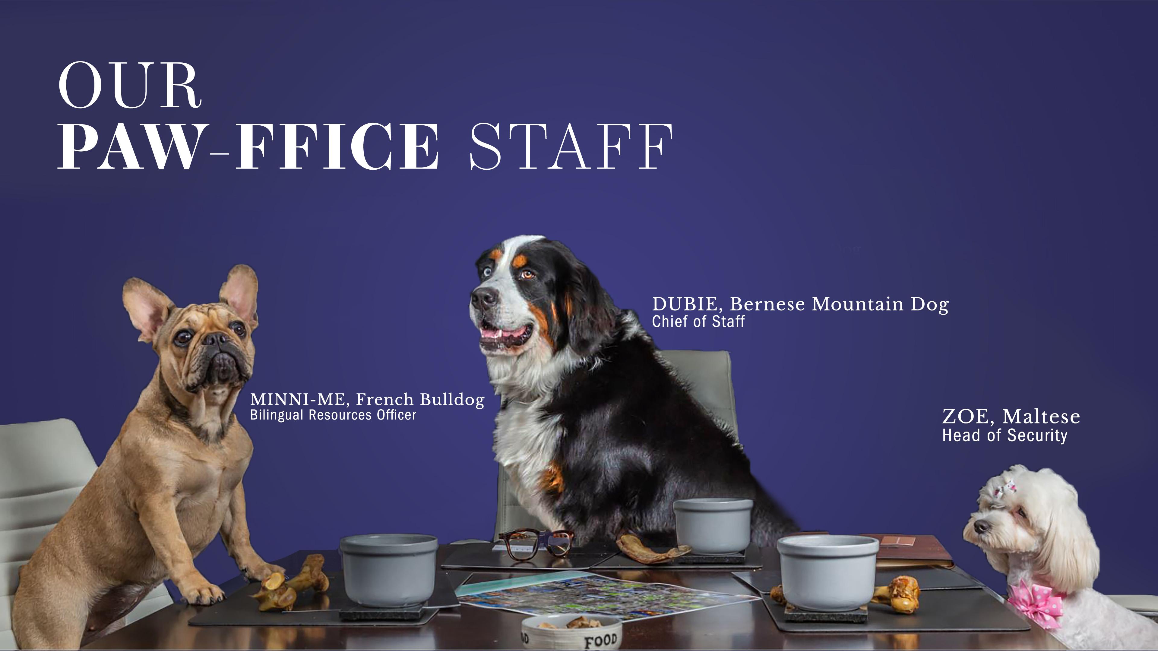 Paw-ffice Staff
